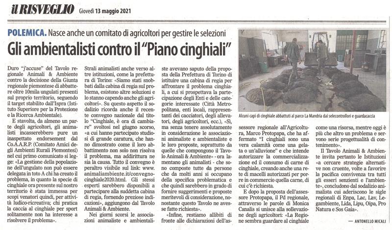 il-risveglio-13-05-2021-piano-cinghiali
