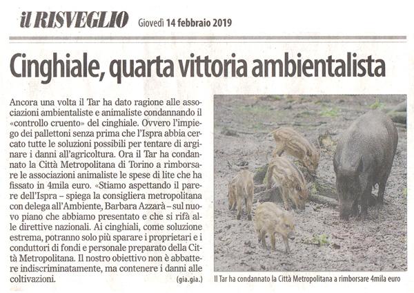 il-risveglio-14-02-2019-cinghiale-quarta-vittoria-ambientalista