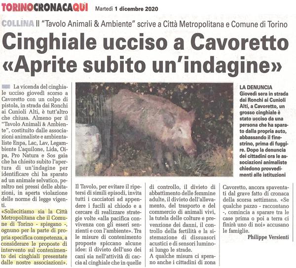 torino-cronaca-01-12-2020-cinghiale-cavoretto
